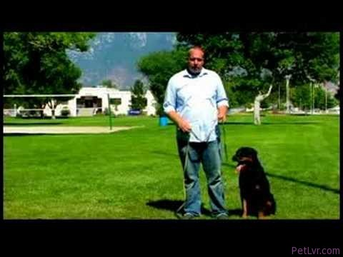 Dog Training Tips : Train a Dog to Retrieve