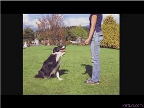 Dog Training Tips : Training 2 Puppies at the Same Time
