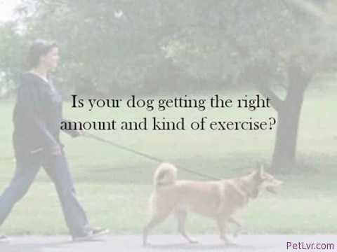 Dog Training Tips: What Is Problem Behavior?