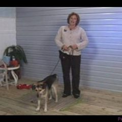 Dog Training Tips : Why Dogs Jump Up