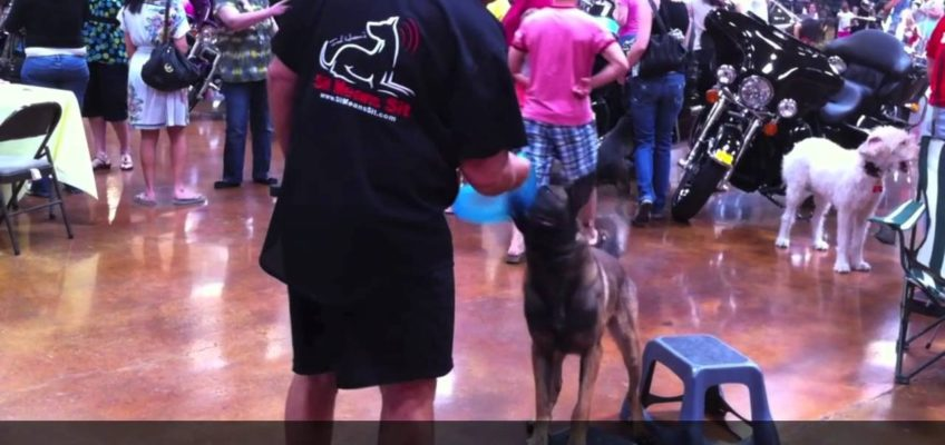 Dog Training – Tug and Stand combined