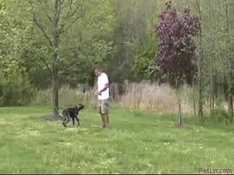 Dog Training Video – Amazing Canine