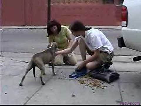 DoggyTV presents a Real Dog Rescue by Downtown Dog Rescue