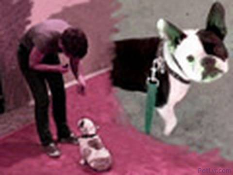 Dogmantics- Dog Training Television- Episode 1