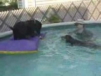Dogs Love Water – Funny Pet Tricks