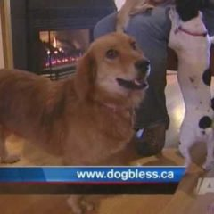 Dogs Rescued from Alabama by Local Animal Rescue Group