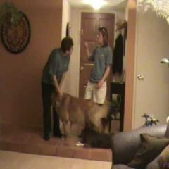 Door Dashing Pt 1: Dog Training Tips from Villa La PAWS, Phoenix AZ