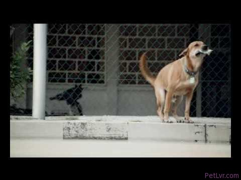 Duke's Film Debut: The SPCA Commercial