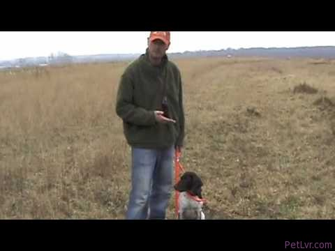 Free Hunting Dog Training Videos – Heel Part 3