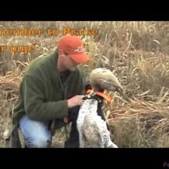 Free Hunting Dog Training Videos – Transition to cones