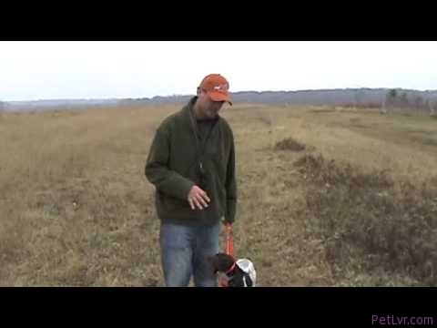 Free Hunting Dog Training Videos – Heel Part 2