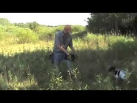 Free Hunting Dog Training Videos – Bird Launcher – Introduction