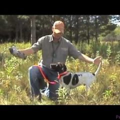 Free Hunting Dog Training Videos – Willow Creek Kennels