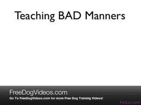 Free Pug Training Videos – How to Train Your Pug in 15 Minutes or Less