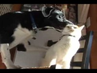 Funny cat vs. Funny dog – Love each other?