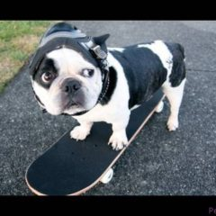 Funny Dog Nash Skateboarding