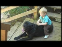 Funny kid rides a dog video