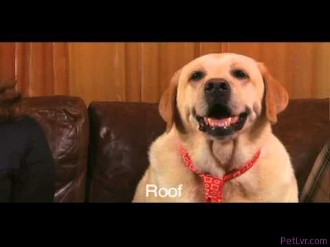 Funny Talking Dog Commercial – FoldFlops