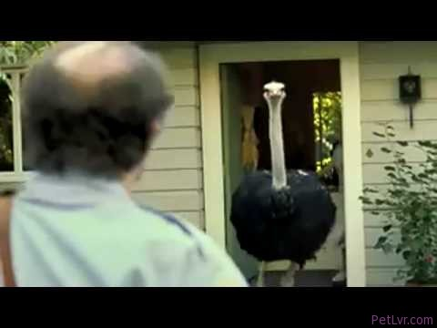 Get A Dog ! | Exotic Pets PEDIGREE Super Bowl Ad | COMEDY | 2009