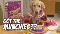 Ginger's Late-Night Snack