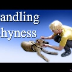 Handling Shyness- Clicker Dog Training