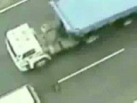 Hero dog (almost) saves another after it was hit in the highway