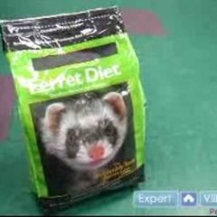 How to Care For a Ferret : Pet Ferret Food