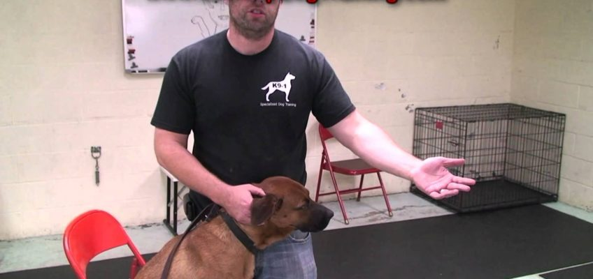 How to Clean Dog Ears – Tips From the Dog Training Guys (k9-1.com)