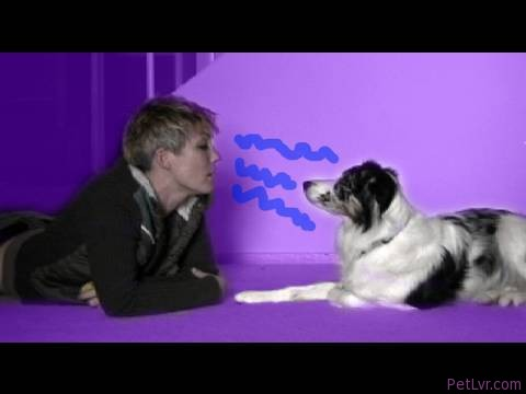 How to communicate with a dog in their own language- dog training dog communication