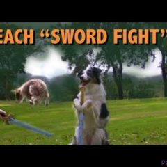 How to teach Sword Fighting- clicker dog training