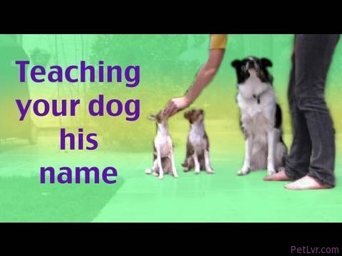 How to teach your dog his name- Dog training Tip of the Day clicker training