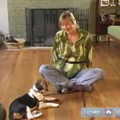 How to Train a Beagle : Teach Your Beagle to Recognize His Name With These Dog Obedience Training Tips