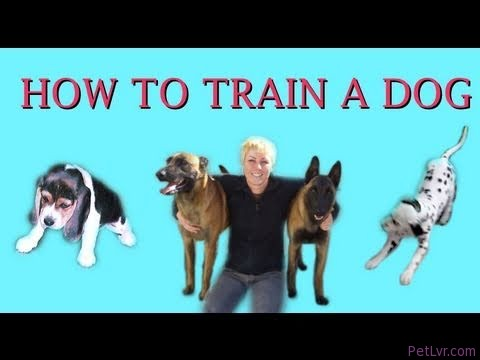 How to Train a Dog- dog training clicker