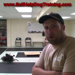 How to Train a Dog to Come When Called – Tips by K9-1 Dog Training.