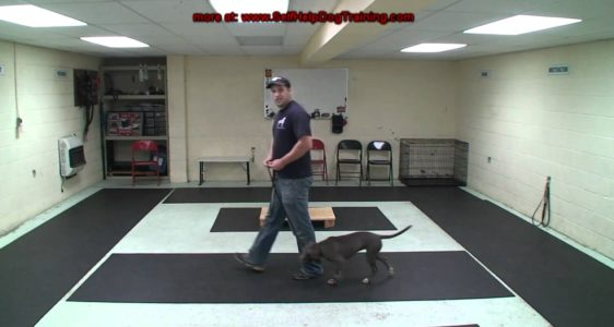 How to Train a Dog to Heel – Dog Training by K9-1.com