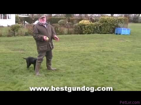 Hunting Dog Training (Pre-Training Part 1)