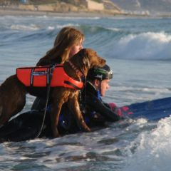 Inspirational video – Turning disappointment into joy: From Service Dog to SURFice Dog