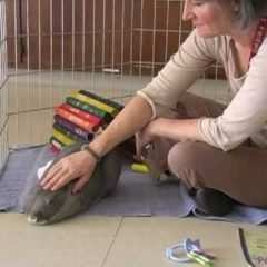 Is a Rabbit the Right Pet for You? A Video by the Marin Humane Society