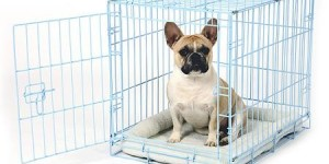 Carlson Pet Products Deluxe Pet Crate