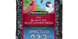 Pennington Select Black Oil Sunflower Wild Bird Seed, 20lb