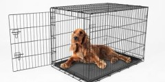 Carlson Pet Products Single Door Pet Crate