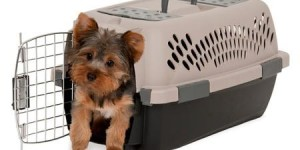 Petmate Pet Taxi Travel Kennel, Multiple Sizes Available