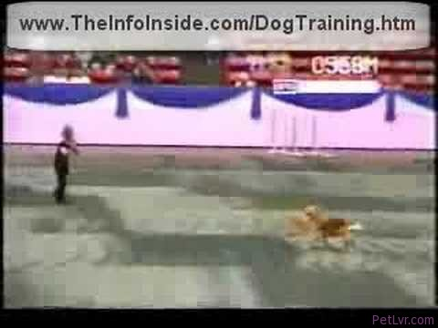 K9 dog Training
