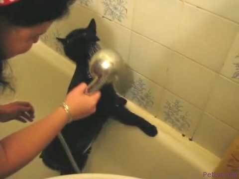 Legrační video, kocour Simba se koupe. Funny Video, The cat Simba is got bath.