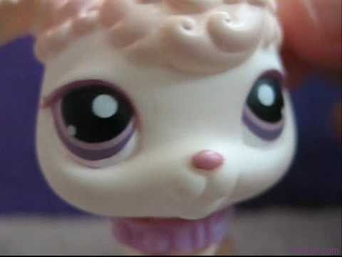 littlest pet shop / you belong with me