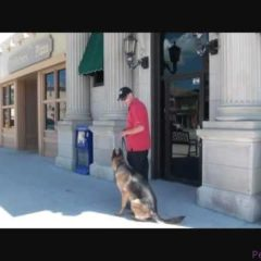 Maddox (German Shepherd) Boot Camp Dog Training video