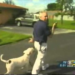 Miami Dog Whisperer Dog training Tip: How to walk your dog properly