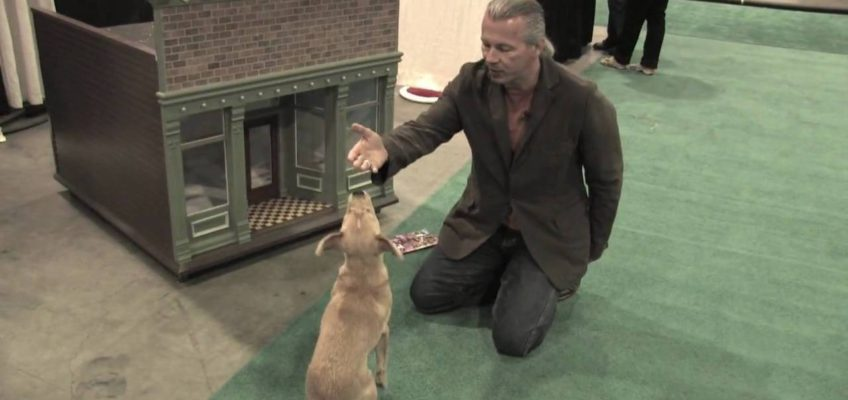Mike Wombacher – Dog Training Tips 2 – Sit, Down, Stand Review – Using Hand Signals