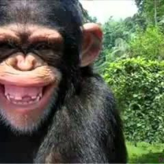 monkey funny video singe drole compilation funniest pet debiloguys vira