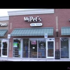 My Pet's Animal Hospital Video